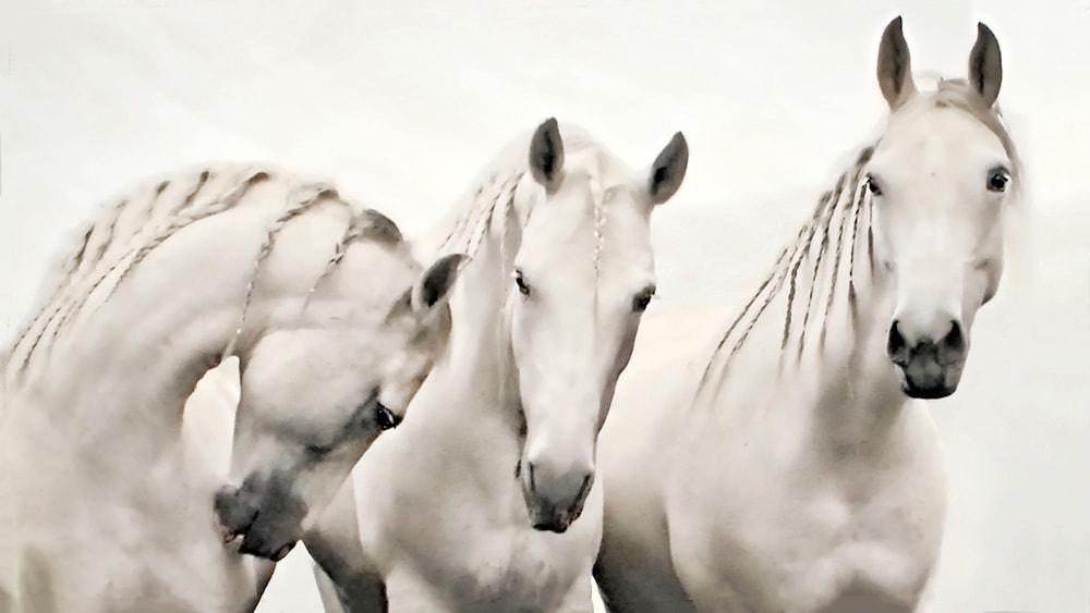 white stallions cut
