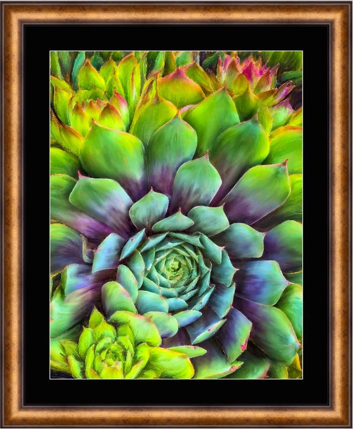 Succulent Splendor Limited Edition
