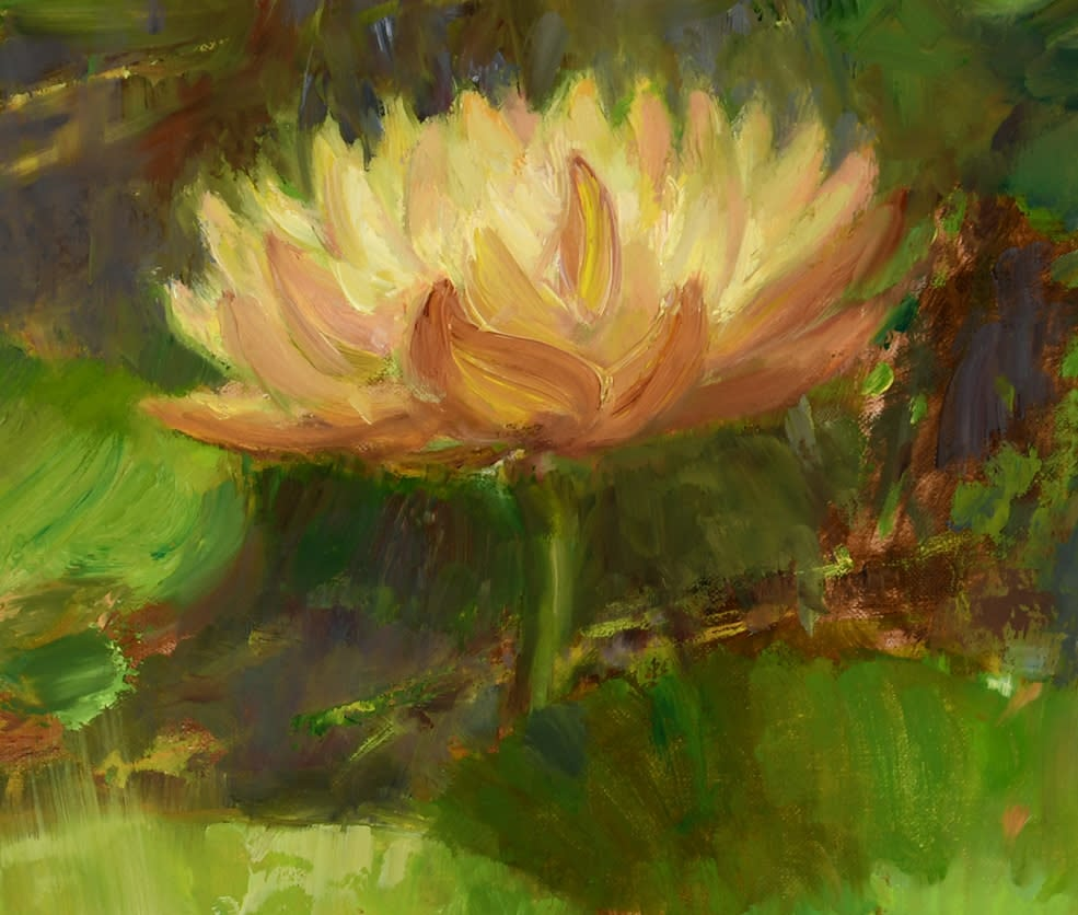 Water Lilies Amongst the Rushes close up 4