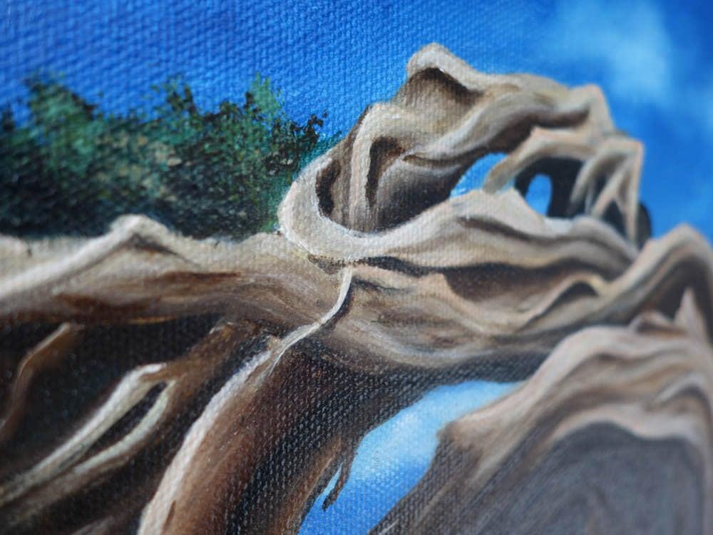 Windswept Dali Detail
