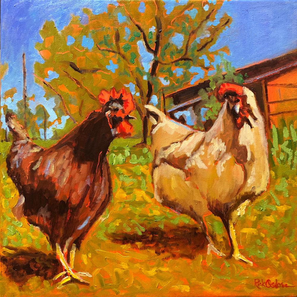 chickens scratch