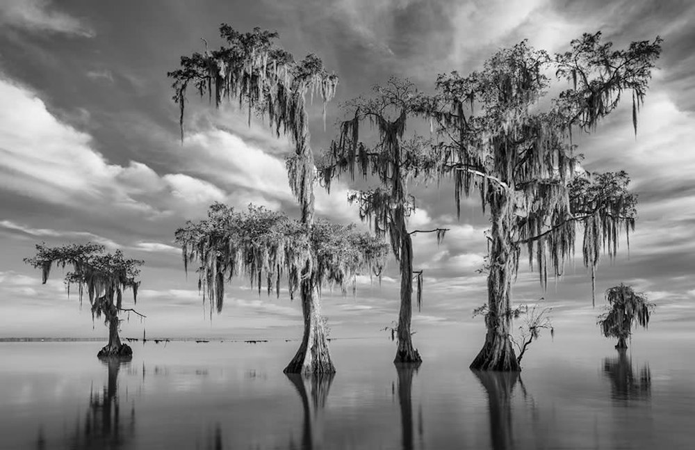 Andy Crawford Photography Lake Maurepas swamp greeting cards