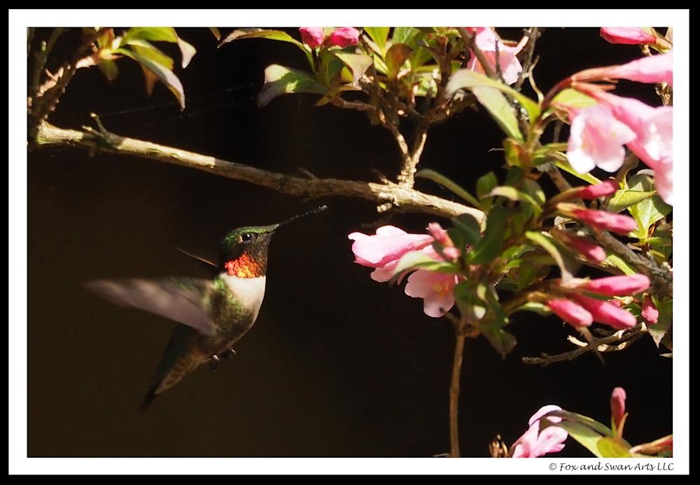 03 Hummingbird
