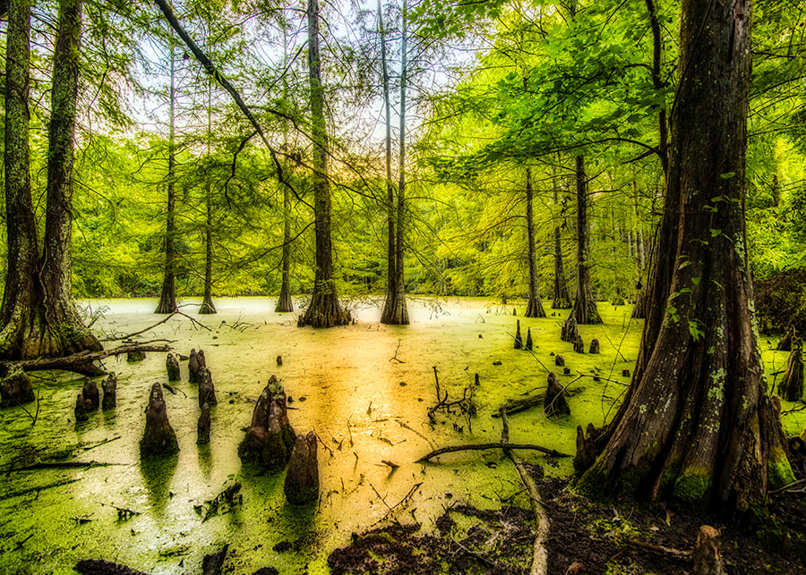 Andy Crawford Photography West Feliciana swamp 20170823 1