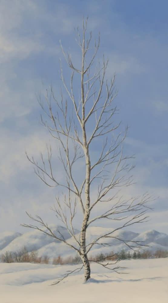 Gedye Splendor in Snow 1000