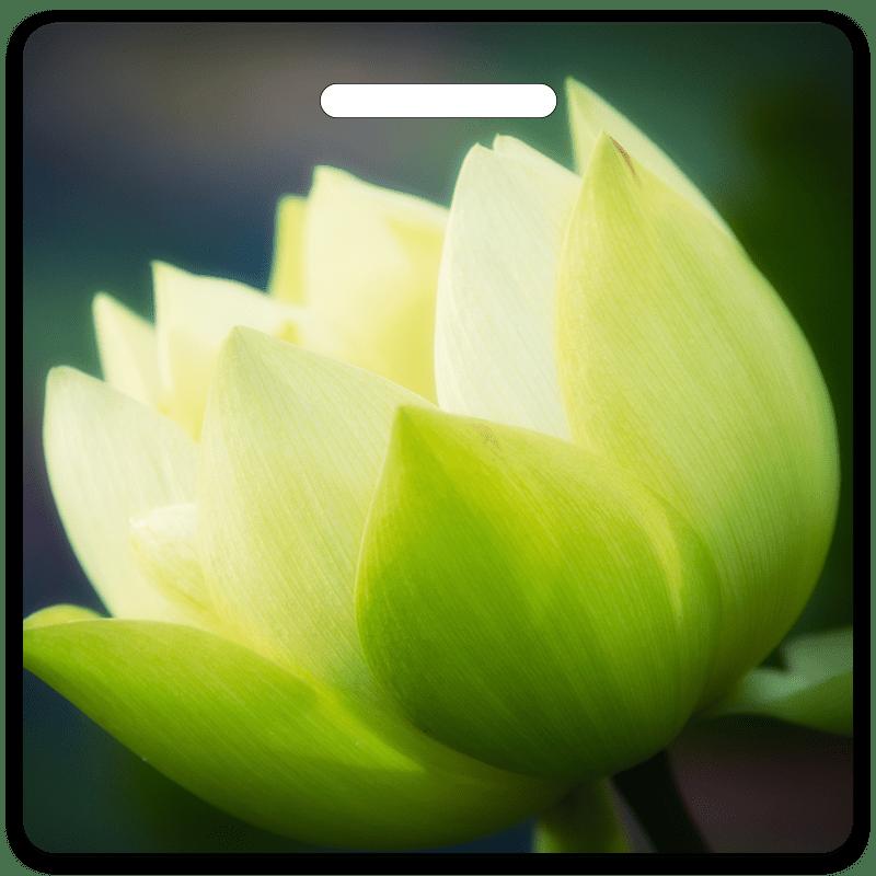 Lotus Bag Tag