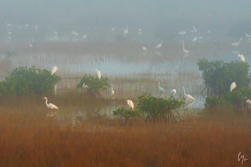 Birds and Fog