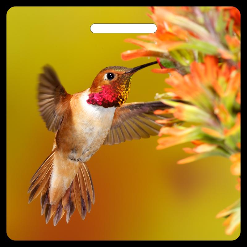 Rufous Hummingbird Bag Tag