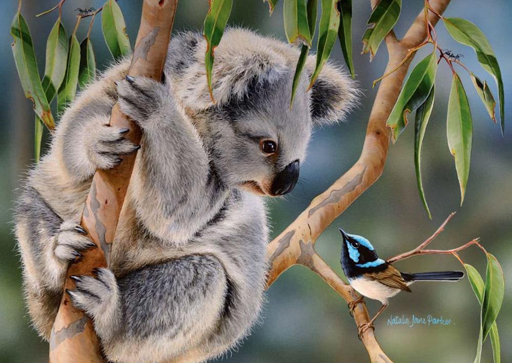 A6 Postcards Koala