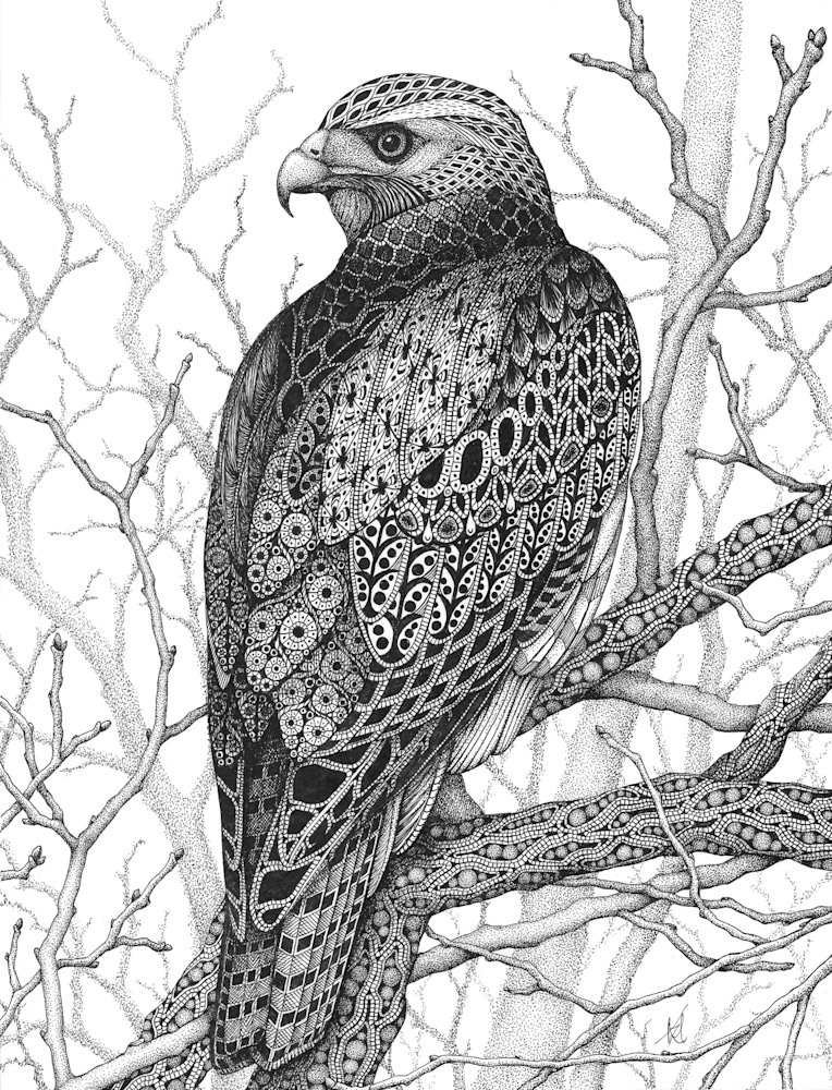 Watchful Eye (hawk)