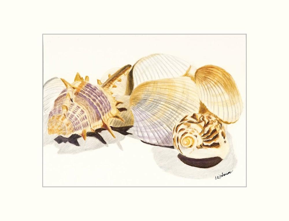 caj shells matted