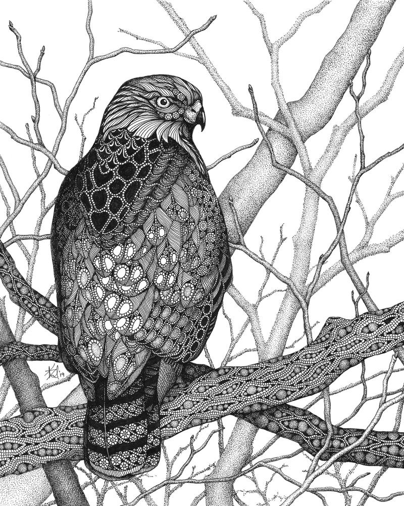 Sentry (hawk)