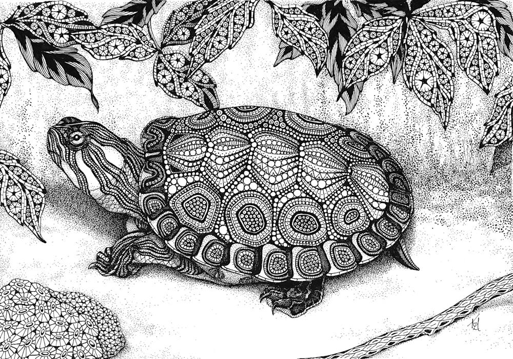 turtle  wood turtle
