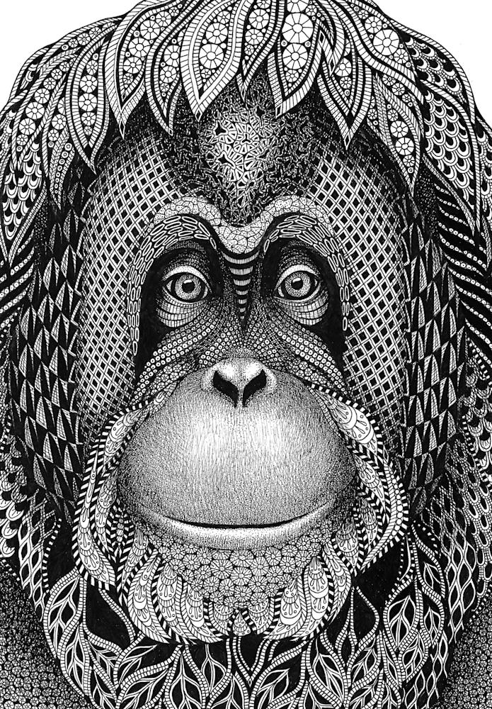 Orangutan  Katie cropped