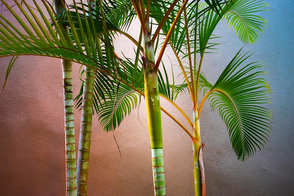 Tropical Balance 1600pxw