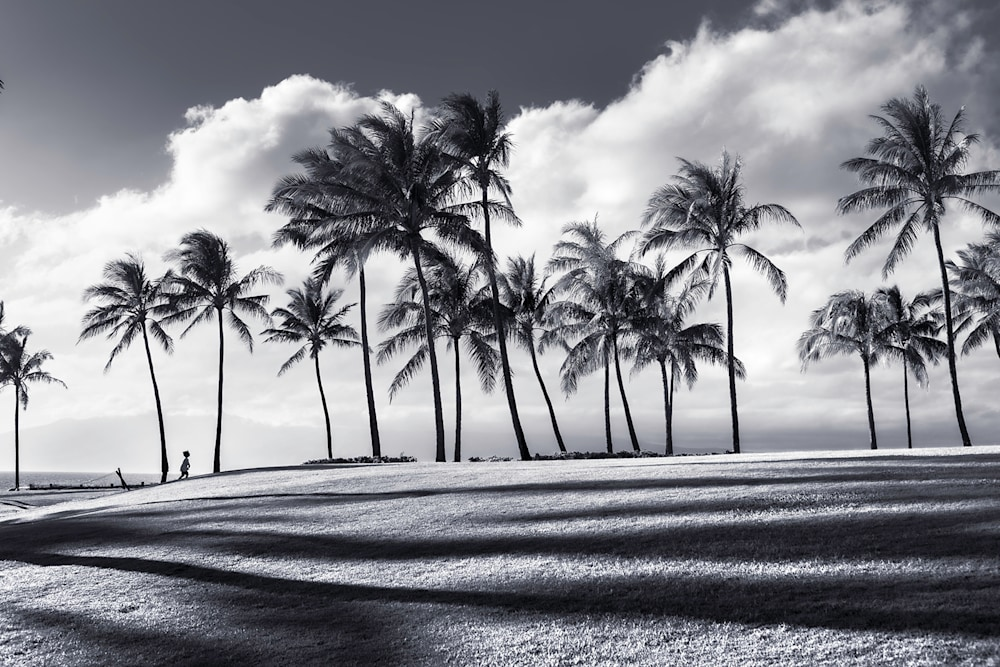Tropical Shadows 1600pxw