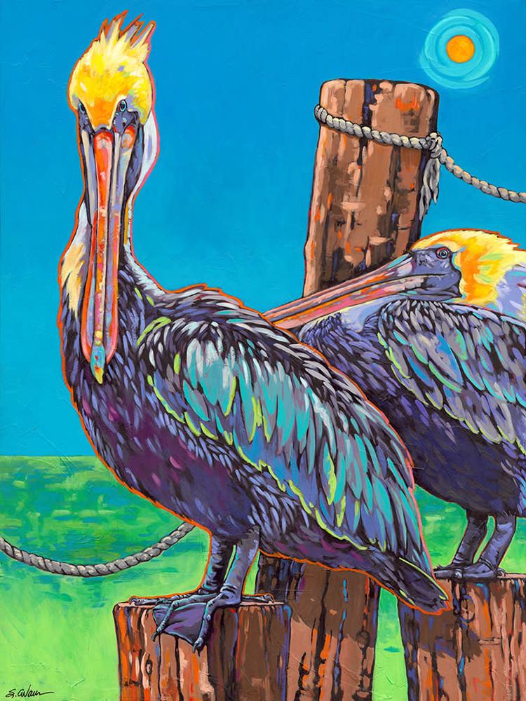 Pelicans sm