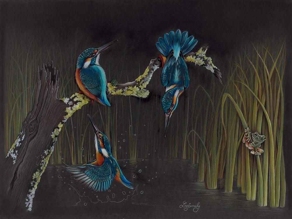 Lisa Kennedy 013 Kingfisher Frenzy 2000px