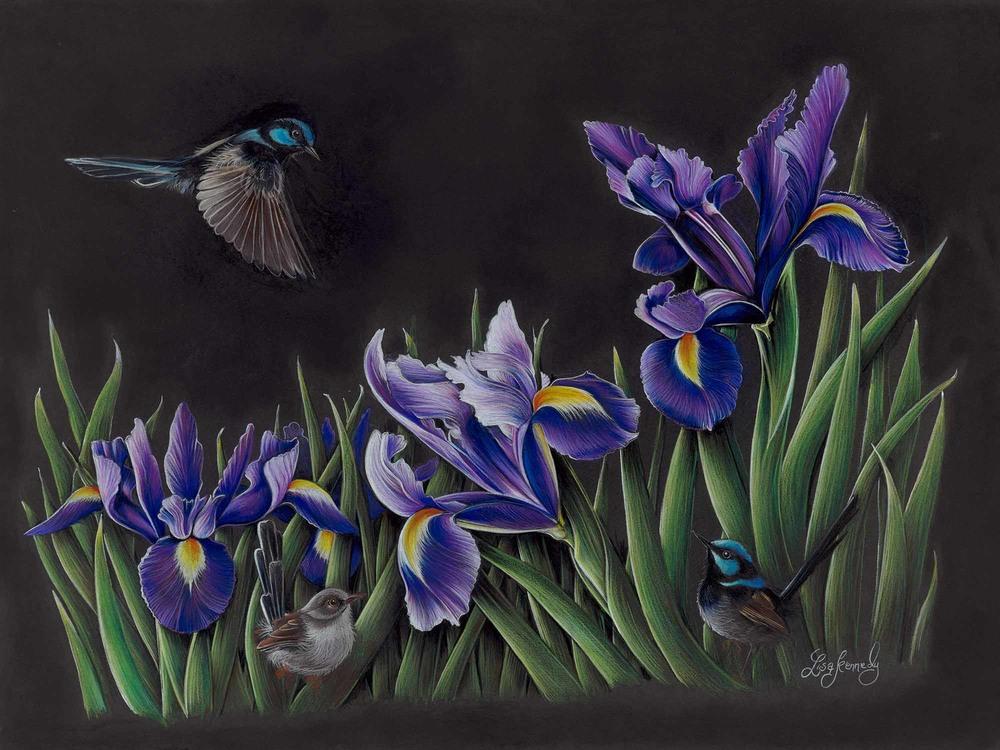 Lisa Kennedy 014 iris Garden 2000px