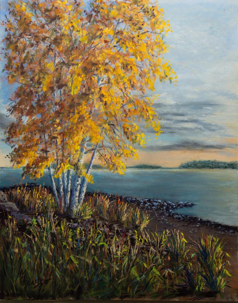 Autumn Birches med