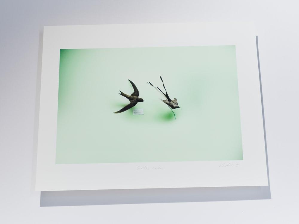 birds p