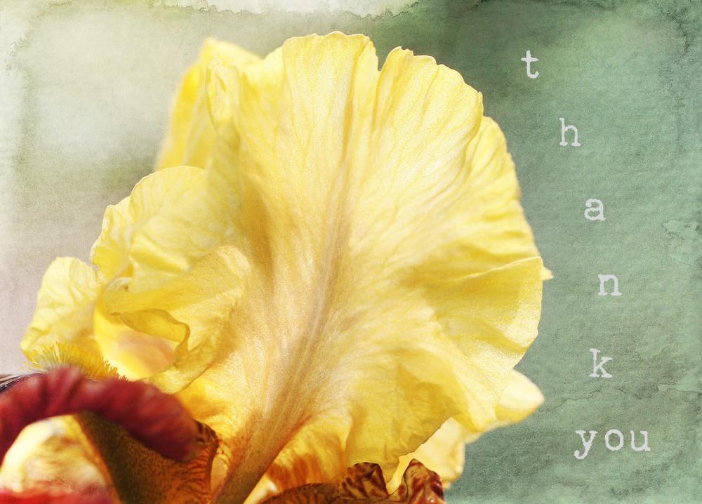 Iris thankyou