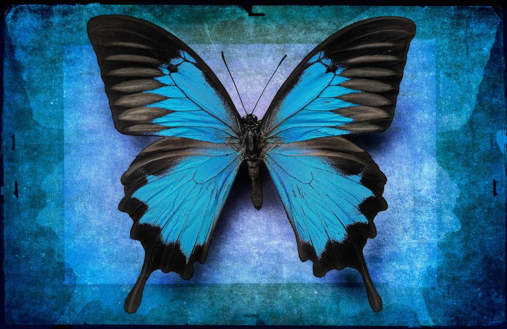 Blue Ulysses2436