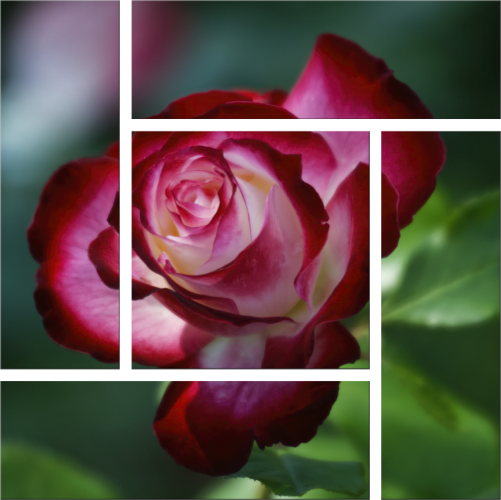 Glowing Rose preview