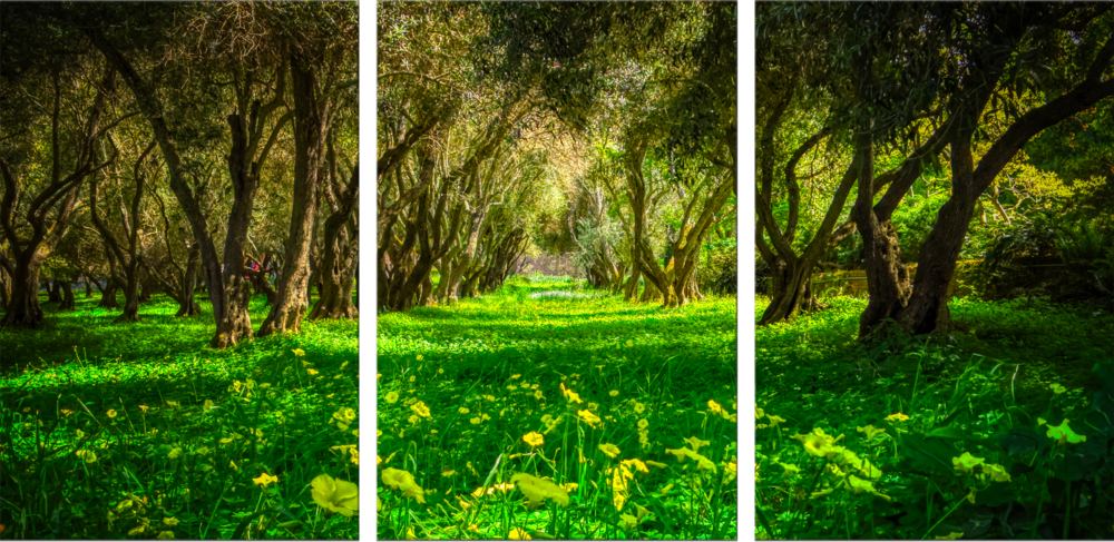 Green Forest Preview