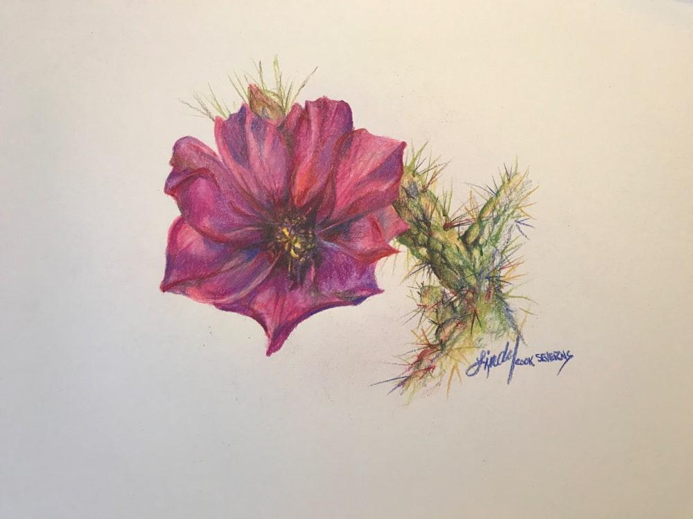 12e17 Cholla Bloom 8x10 colored pencil Lindy C Severns