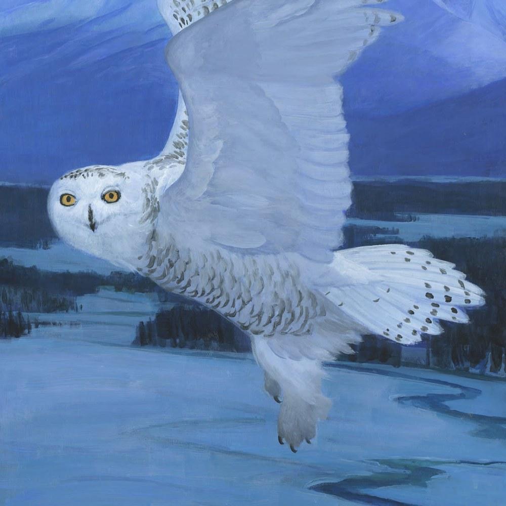 snowy owl det#2