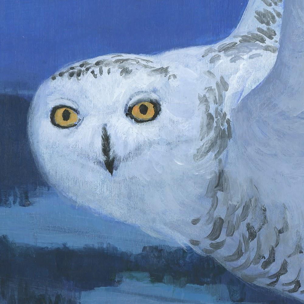 snowy owl det#1
