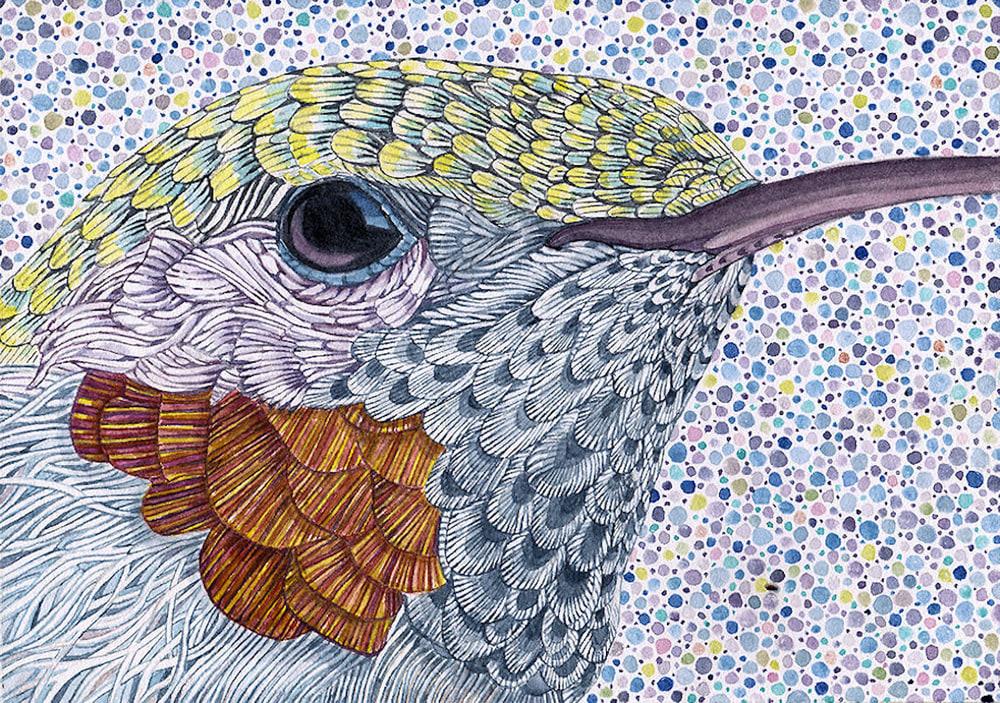 hummingbird 5x7 JB