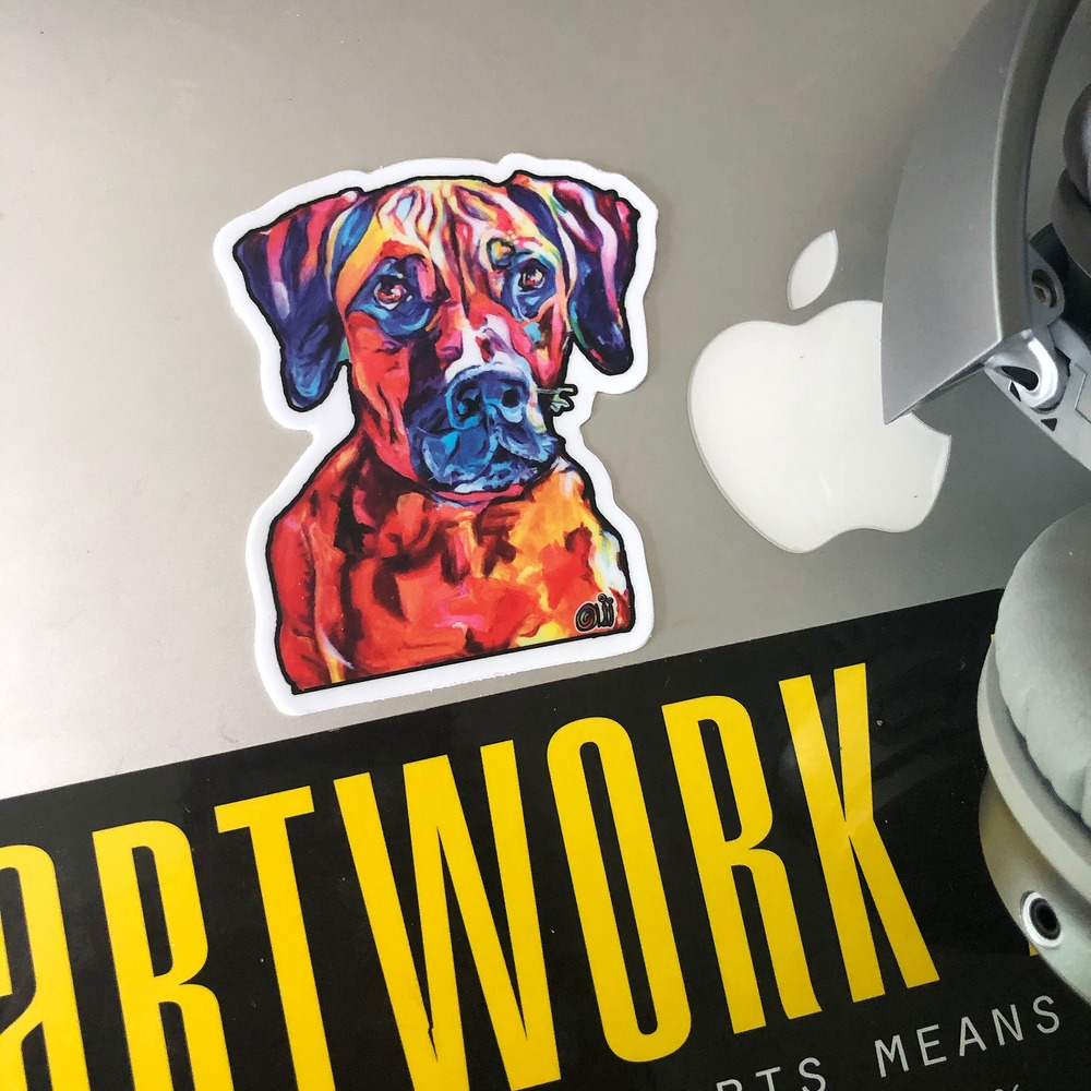 Boxer  laptop
