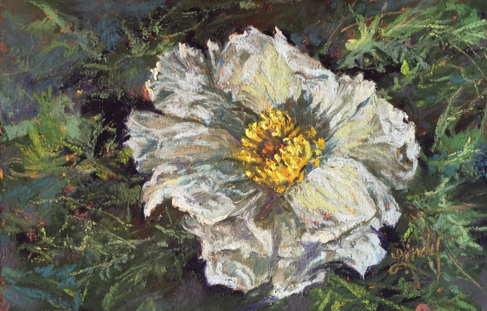 18G16 Lace in Thorns 4x6 pastel Lindy C Severns