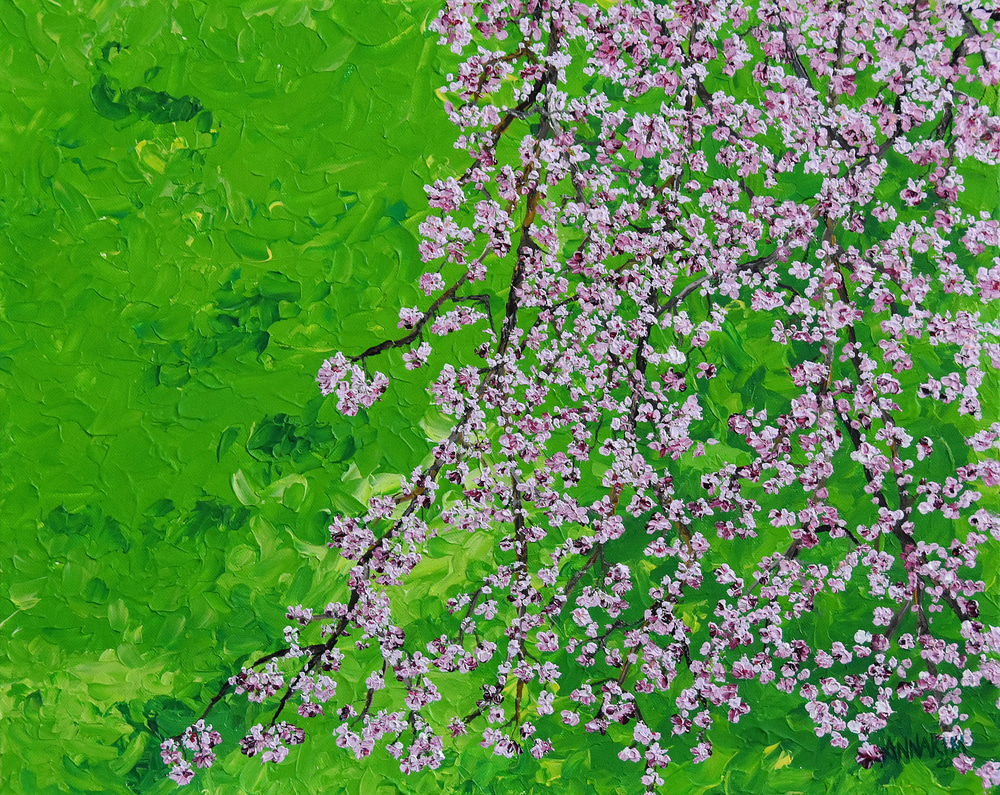 Weeping Cherry Blossom