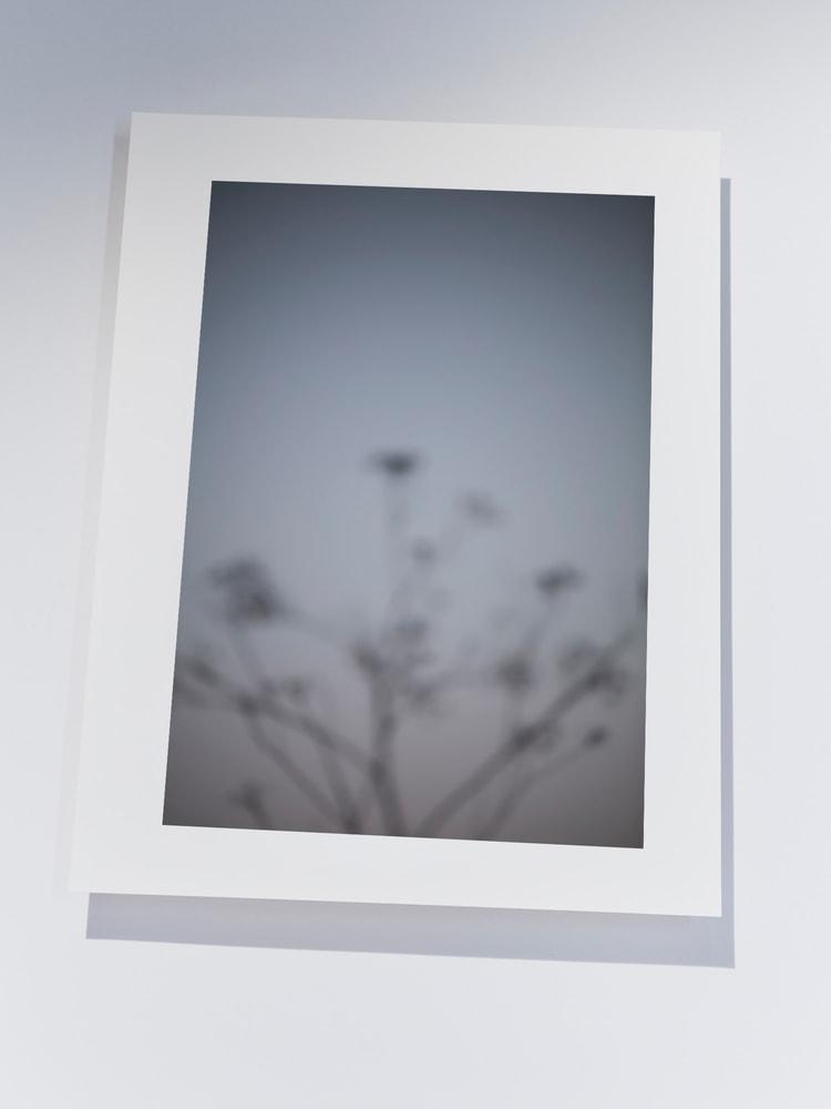 Soft botanical print