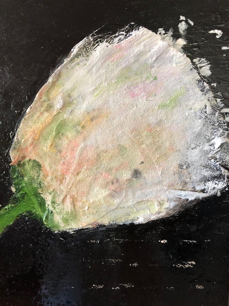 white rose w pink 12x9