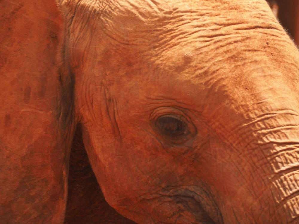 ElephantNursery03