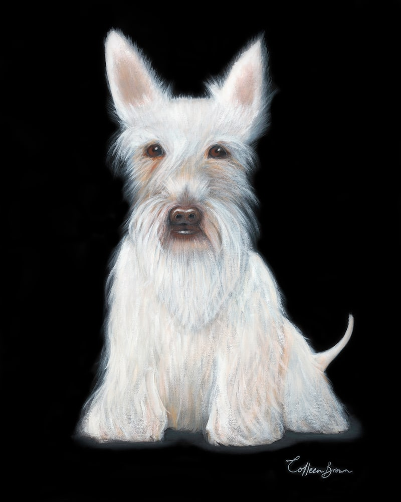 ColleenBrownArt White Scottie 16x12 adjbyme
