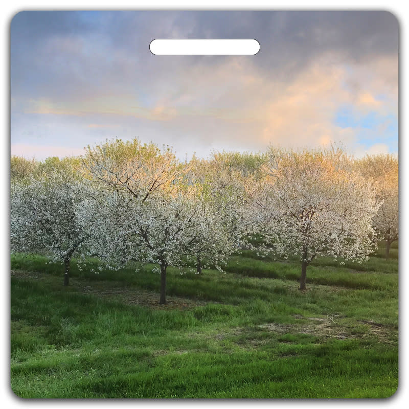 Field of Cherry Blossoms Bag Tag