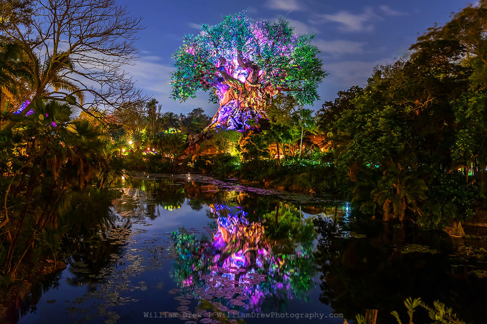 Tree of Life Reflections sm