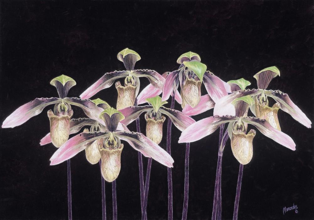 Orchids  by GailOyer Mercedes oil14hx20w