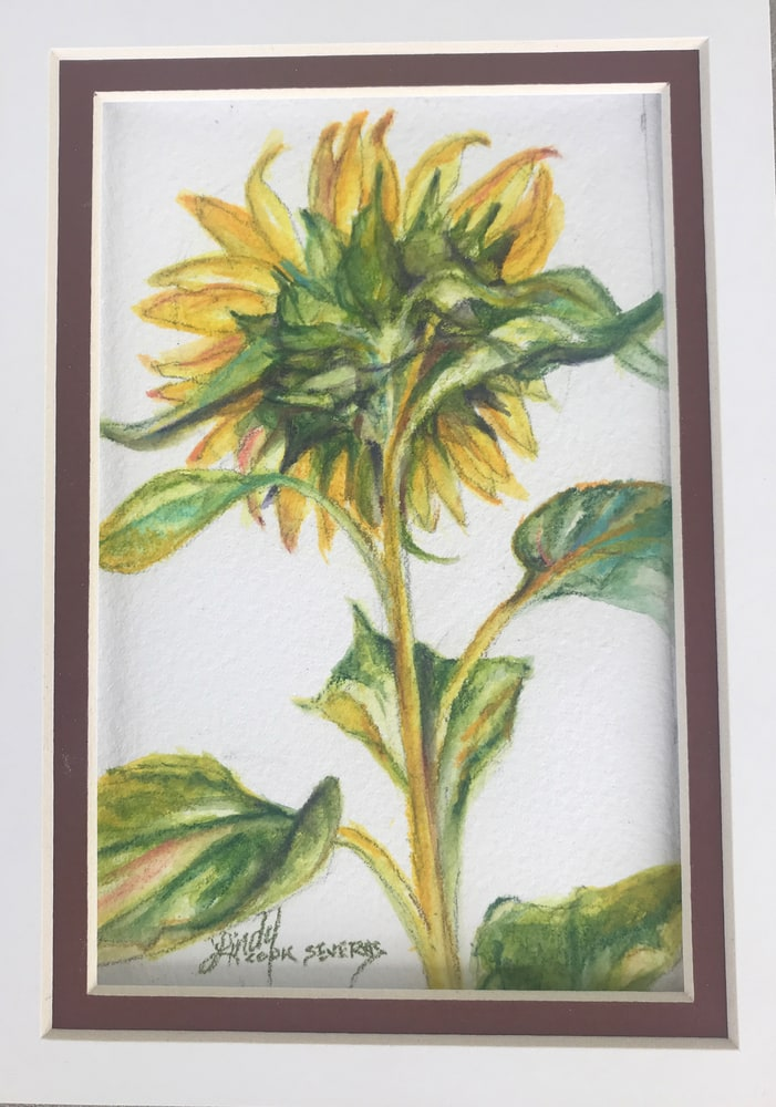 Shy Sunflower 4x6 watercolor matted Lindy C Severns