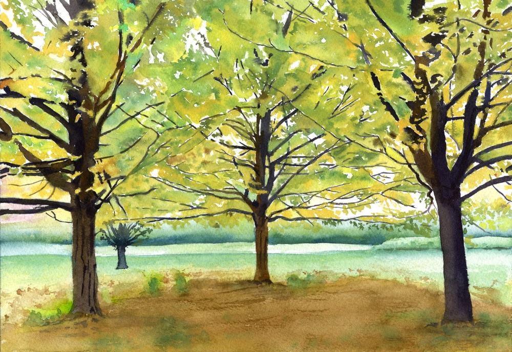 July 17 01 Maple Trees  ASF PRINT