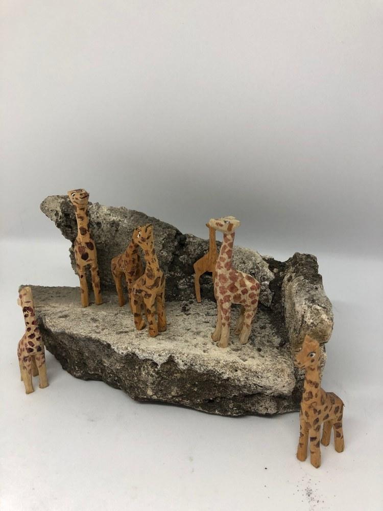 Giraffes5