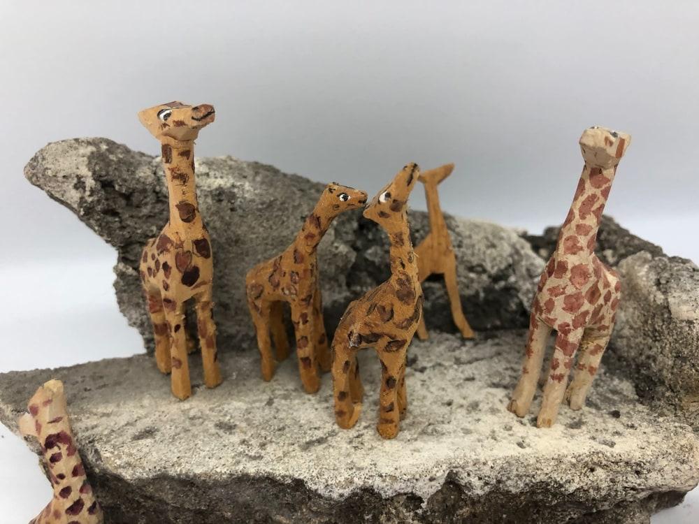 Giraffes3