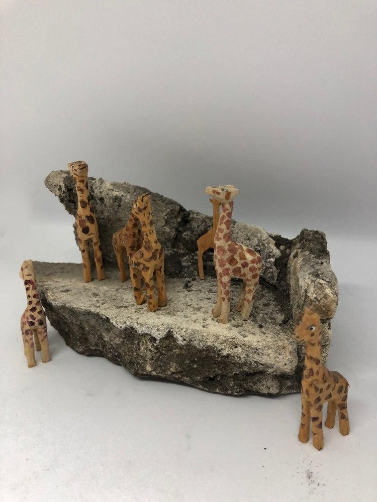 Giraffes4
