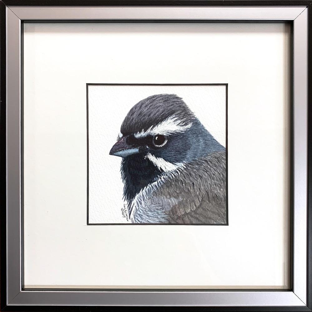 Black throated Sparrow Framed