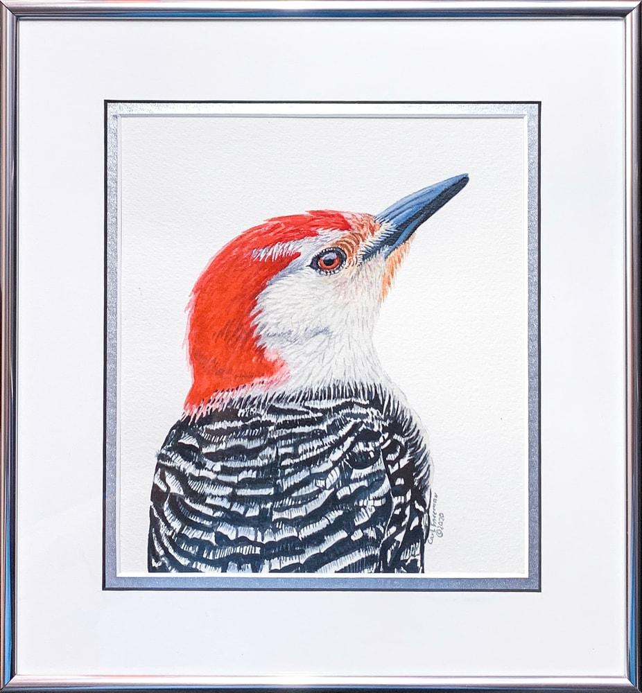 Red bellied Woodpecker Framed